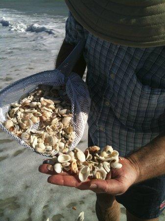 West Wind Inn : Bring a net to capture the best shells