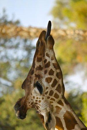 Wildlife World Zoo and Aquarium : Nanny nanny noo noo.