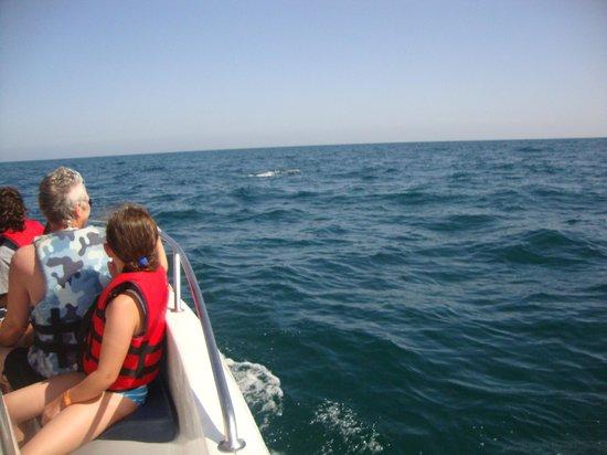 Club Calimera Yati Beach: Ausflug haben Delphine gesehen
