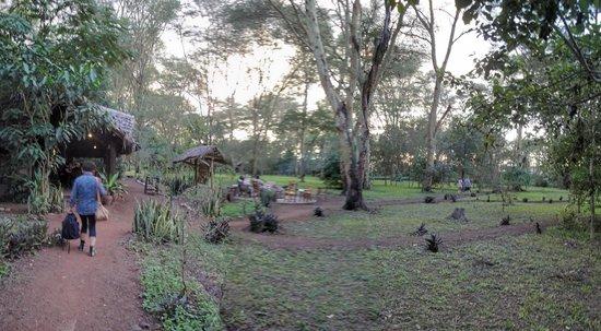 Migunga Tented Camp acacie