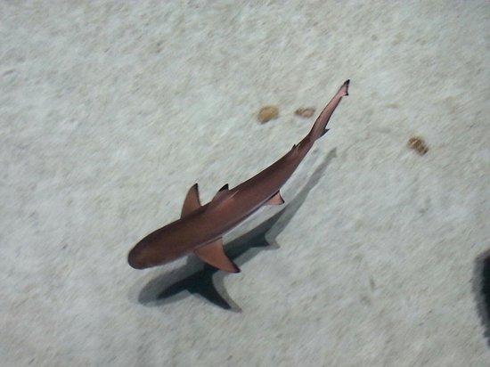 National Aquarium : Black tip reef shark