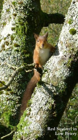 Low Briery Holidays: One of the Red Squirrels in the Park