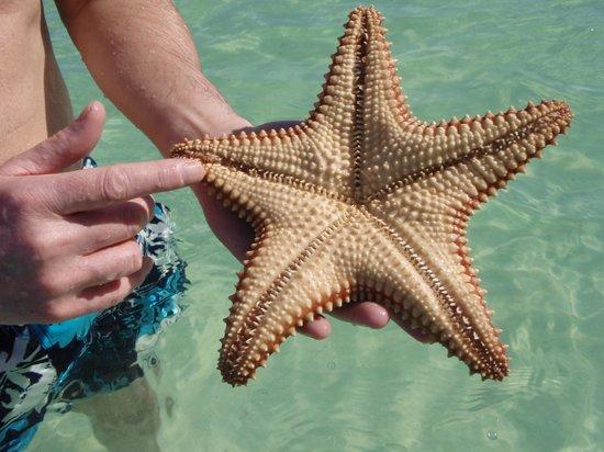 Excellence Playa Mujeres: Starfish