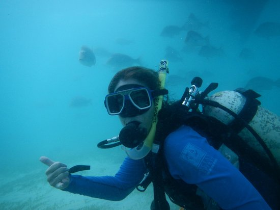 Falla Reef Trips: dive and fish