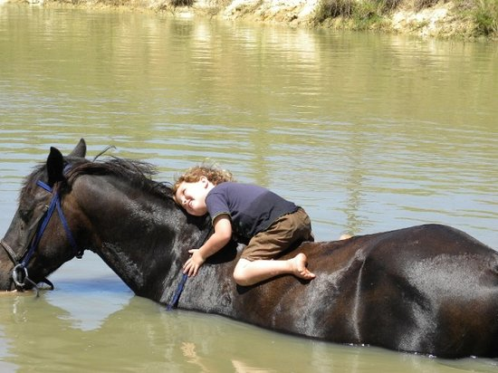Garden Route Horse Trails: Cooling off on Ban