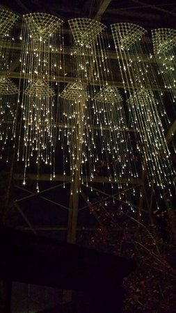 Franklin Park Conservatory and Botanical Gardens: the lights at night