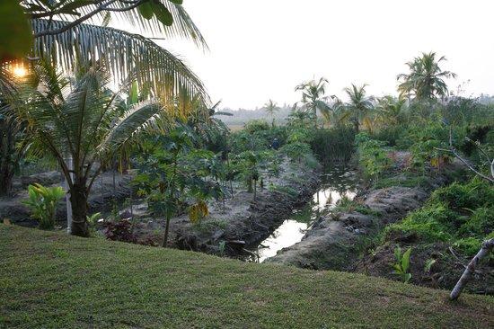 Shangri-Lanka Villa : Paraman's vegetable garden