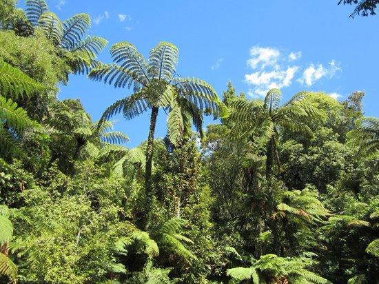 Paradise Valley Springs Wildlife Park: Bush walk