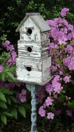 Essex Inn : Bird friendly garden
