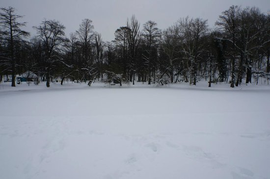 Carol Park (Liberty Park): The frozen pond.
