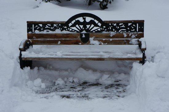Carol Park (Liberty Park): A frozen bench.