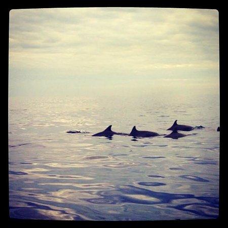 Lovina Beach : Amazing Creatures