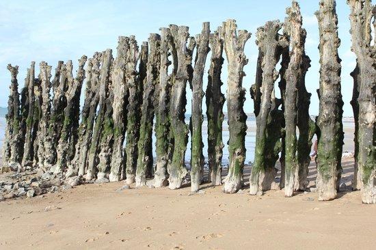 Plage du Sillon : mur de bois plantés
