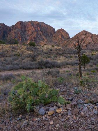 Big Bend National Park : Chisos