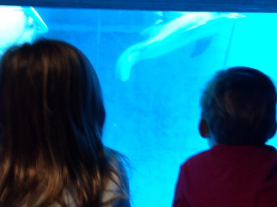Clearwater Marine Aquarium: Up close and personal with Winter!