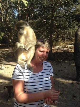 Lams Tours - Day Tours: monkeys