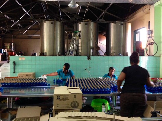 Curacao Liqueur Distillery: Take a few minutes to watch the women bottle the Curacao.