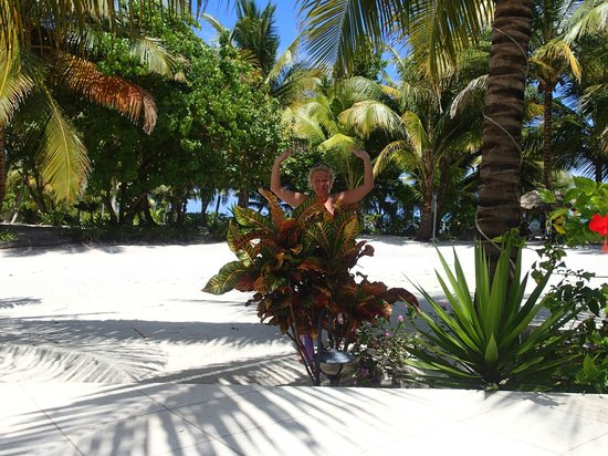 Cocotal Inn & Cabanas: grounds off the pool area