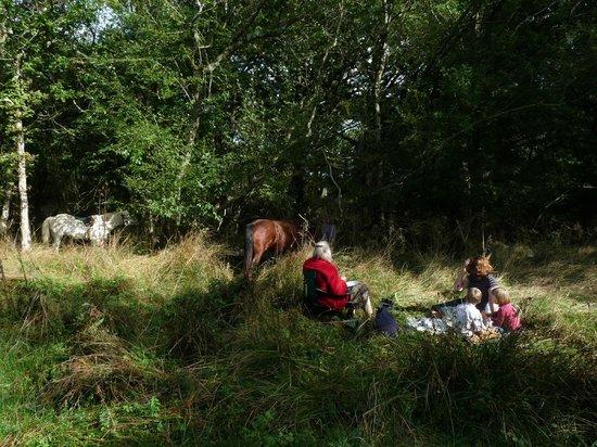Safari Glamping : picnic with the ponies