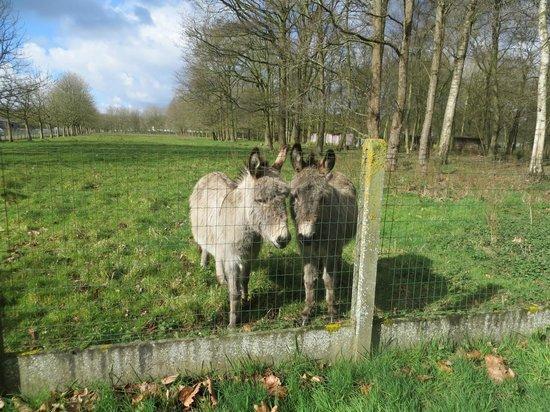 Green Park Hotel Brugge : les voisins