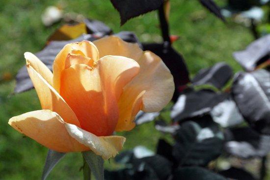 Fairmont Scottsdale Princess: Fairmont Scottsdale