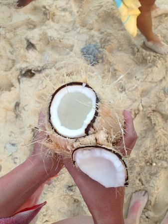 Abe's Snorkeling and BioBay Tours: Fresh coconut juice!