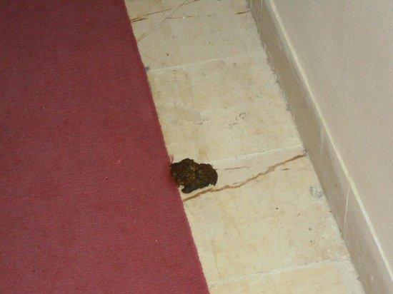 Hotel Vendome El Ksar Resort & Thalasso: De katten liepen vrij rond en dit is het gevolg schande .