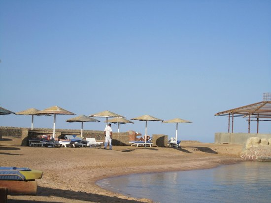 Festival Shedwan Golden Beach Resort: Пляж с кораллами