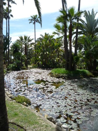 Don Carlos Leisure Resort & Spa: grden