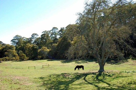 Mariton House : Horses happily graze.