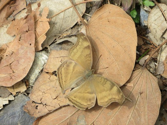 Butterfly on dry leaves - Picture of The Retreat, Bhimtal
