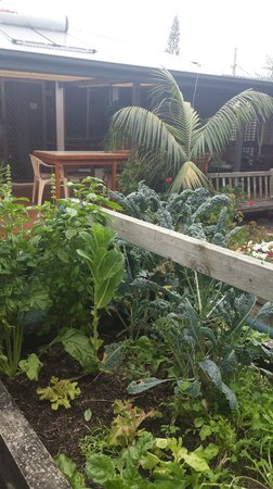Barbara's Guesthouse: Herb garden and outdoor area.
