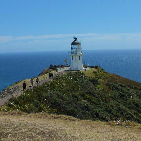 Cape Reinga Adventures Day Tours : Cape Reinga Lighthouse tip of New Zealand
