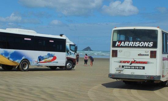 Cape Reinga Adventures Day Tours : Coaches on 90 mile beach
