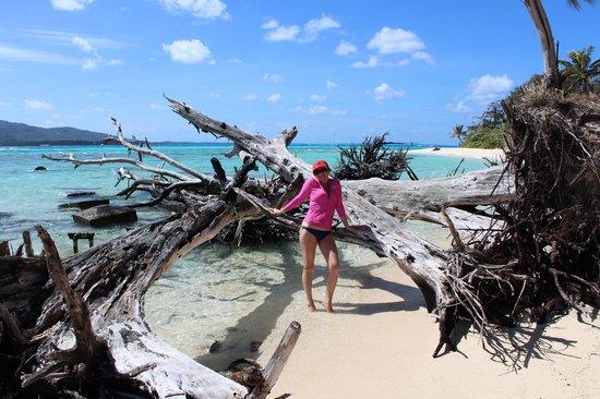 Managaha Island: Живописный залом из тропических коряг