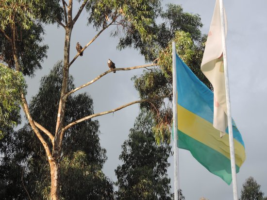 Mountain Gorilla View Lodge: Hotel flags and birds