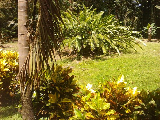 La Perla del Caribe: Beautiful garden