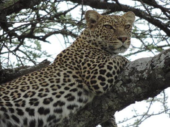 Ndutu Safari Lodge: A cat of Ndutu Lodge
