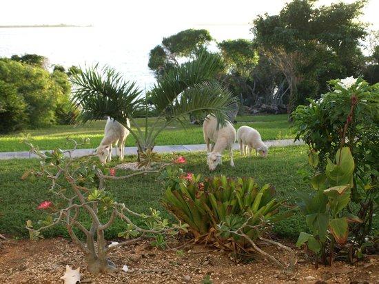 Gems At Paradise Resort: green mower