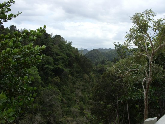 Arecibo Observatory: View from platform