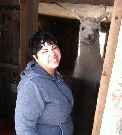 Sugar the friendly llama that lives at the Clove Cottages!