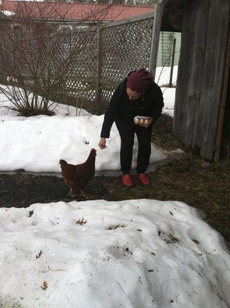 Clove Cottages: My wife saying hello to the chicken that provided us with fresh eggs!