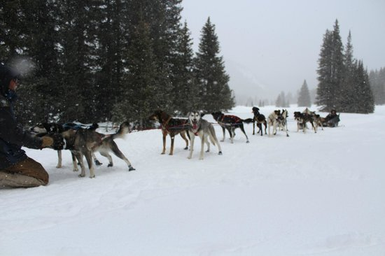 Monarch Dog Sled Rides: Happy Sled Dogs