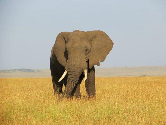 Kicheche Bush Camp: Elephants!