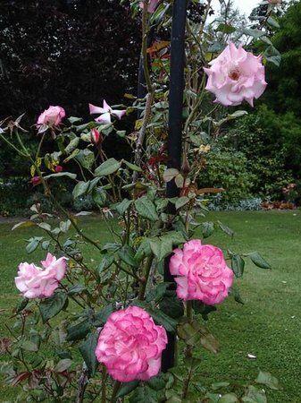The Downs B & B : Roses and beautiful flowers in the garden