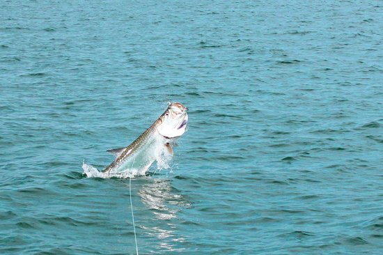 Panama City Inshore - Fishing Guides