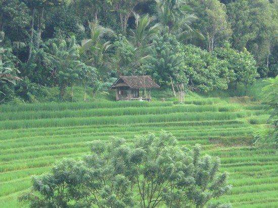 Bali Go Beyond Tours - Day Tours: Belimbing Village - Bali