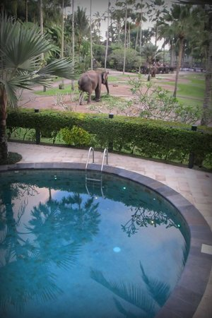 Elephant Safari Park & Lodge: view from pool