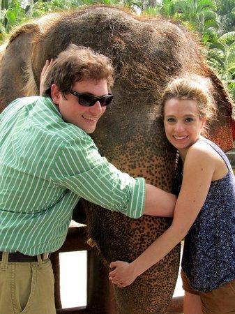 Elephant Safari Park & Lodge: Elephant huggers