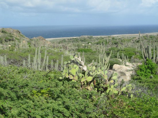 Divi Village Golf and Beach Resort: The east side of the island with all the cactus growth and the big waves